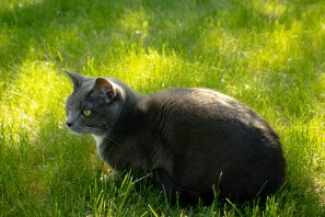 Floyd-In-The-Grass-4-(Optimized)