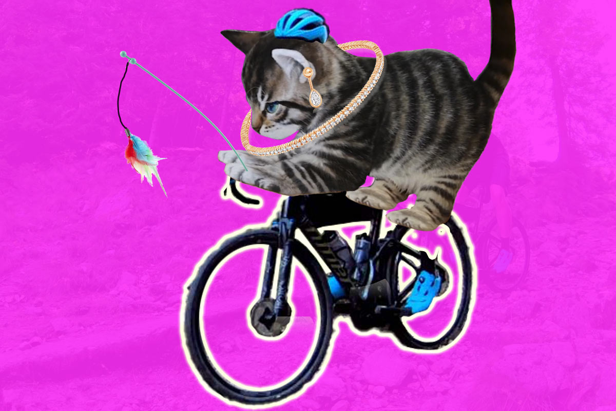 cat riding a bicycle illustrates how to make your marketing pitch perfect so it resonates with consumers
