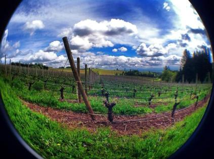 Erath Winery, Dundee, Oregon