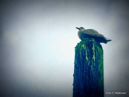 Seagull perched on pier