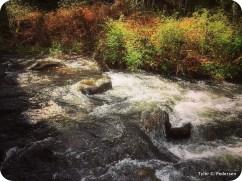 Bear Branch Creek