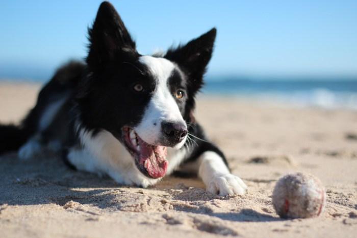 Stella-Dog