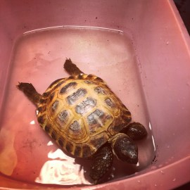 #tortielife – Soaking.