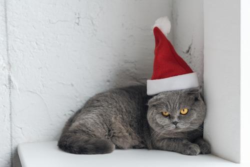 Sunday Funny: Fractious Cat Handling (work-safe)