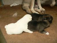 日本犬は天然記念物です。知ってますか?