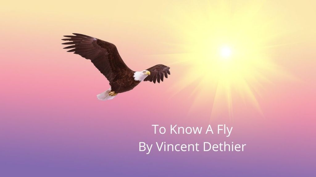 To Know A Fly Vincent Dethier