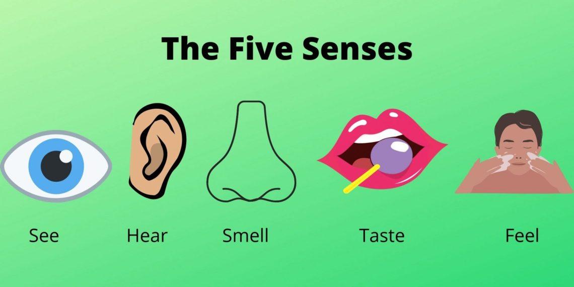 The Five Senses of Human