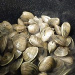 fresh-littleneck-clams-mercenaria-mercenaria-being-prepared-for-dinner-photo-credit-t-young