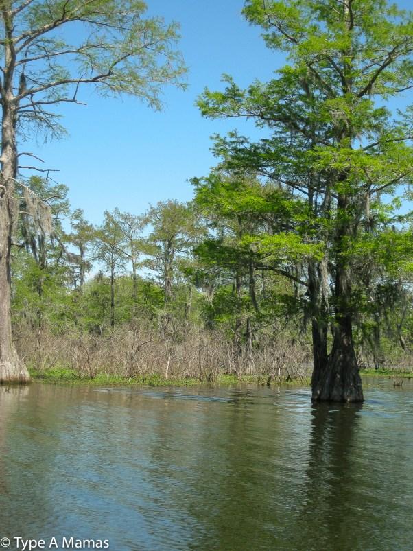 Atchafalaya basin, Louisiana © Type A Mamas