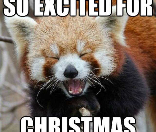 Funny Christmas Memes For  That Bring Joy Love And Plenty Of Cheer