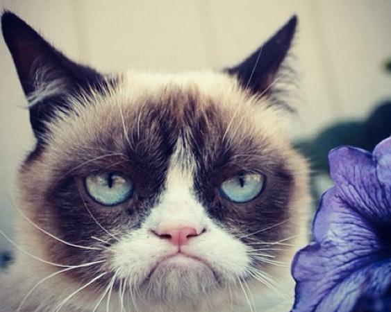 Australian News Anchor Interviews Grumpy Cat Goes