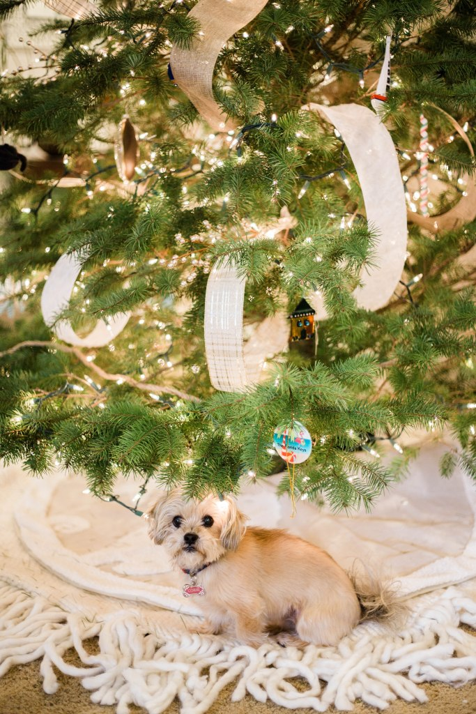 Christmas tree decoration ideas, Christmas tree decorations with ribbon, shorkie