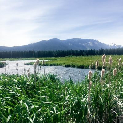 View of water and marsh from Fish Lake WA