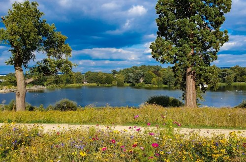 Beautiful meadow flowers by the lake at Trentham Gardens