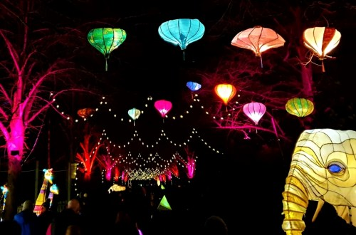 The Lanterns at Chester Zoo image