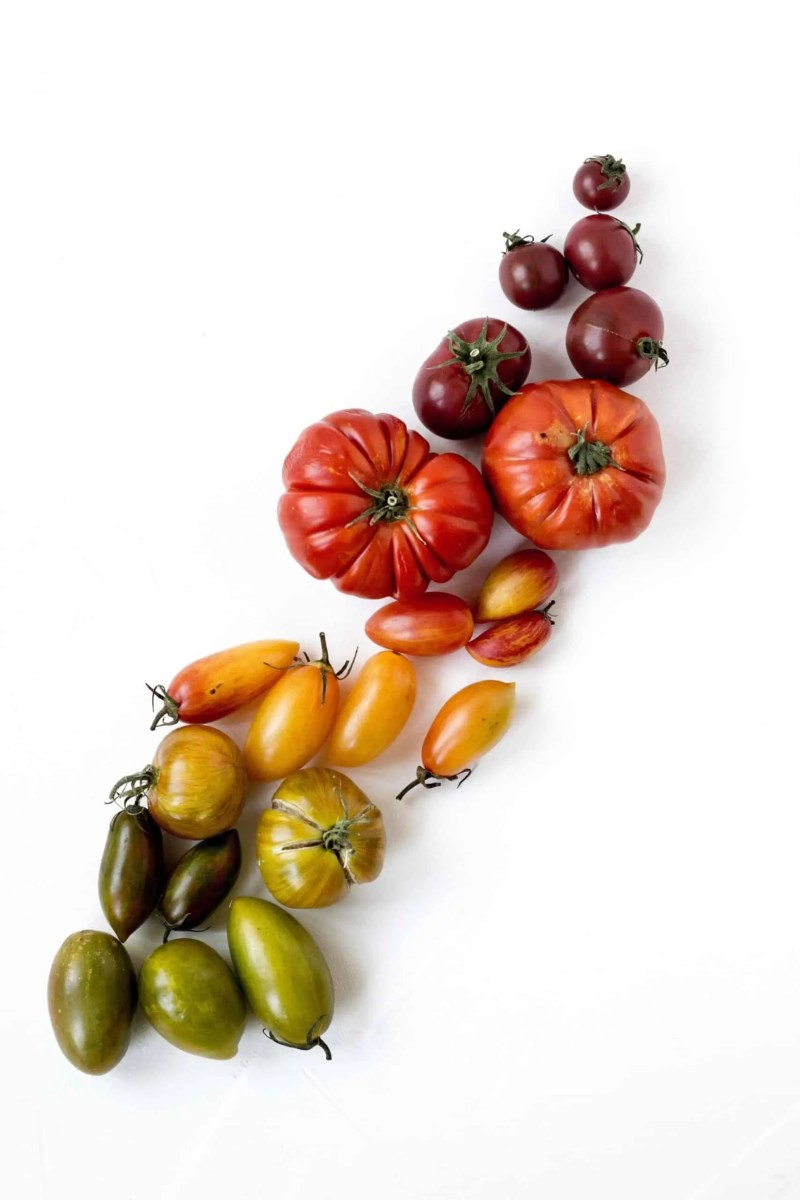 tomatoes-all-sorts