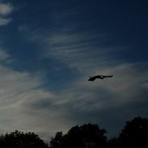 Overhead, Open Field