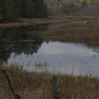 Tomkpins Creek
