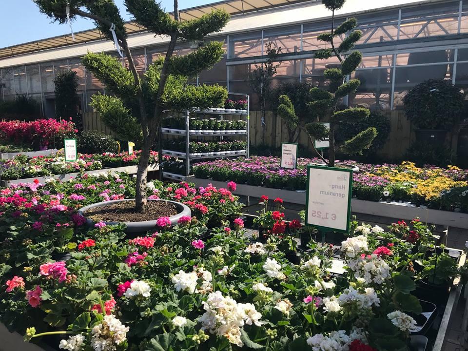 Avri bloem & tuincentrum