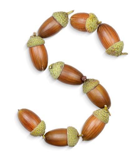 acorns-font-poster2