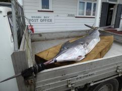 0188. Marlin at Waihau Bay (Copy)