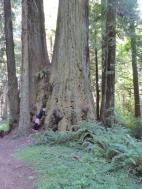 009. Trees near Elk Prairie Campground