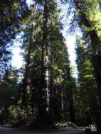 010. Trees near Elk Prairie Campground