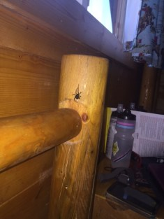 black-widow-spider-in-our-cabin