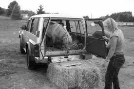 small pony in car