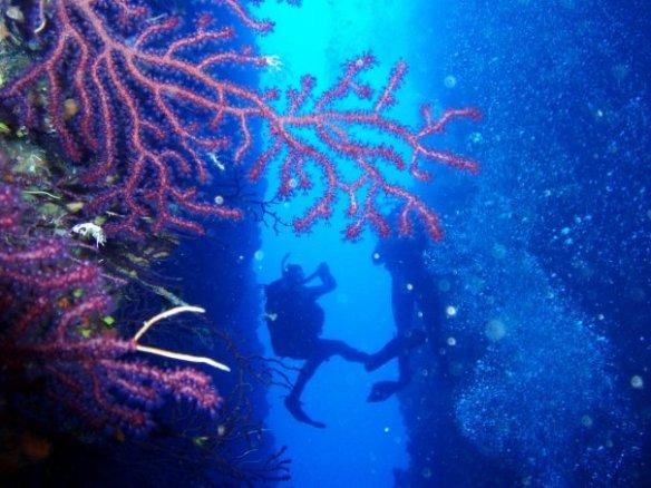 Diving – Tourist Board of Lastovo island