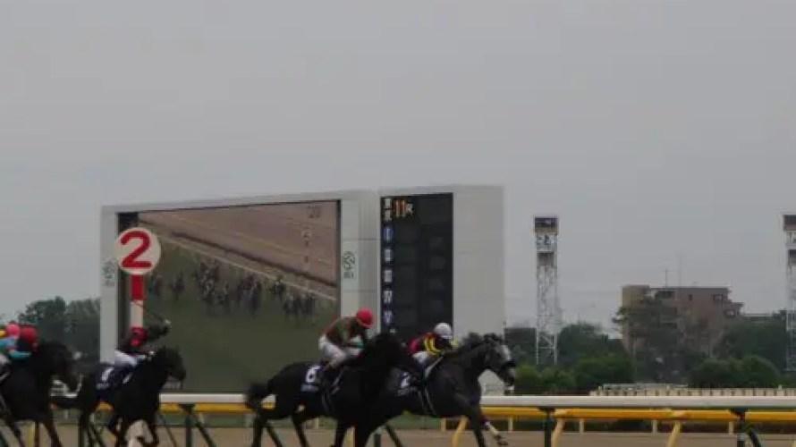 2019 中京 中京記念 仕分け予想 グルーヴィット、クリノガウディー、カテドラルの3歳馬ボックス!