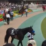 【登録馬・参考レース】2020 中山 オールカマー