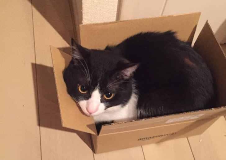 amazonの箱 猫