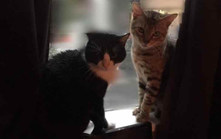 キジトラ猫 お気に入りの場所