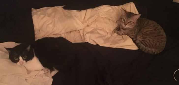 キジトラ猫 ベッド