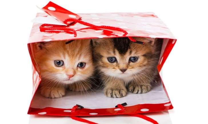 プレゼント兄弟子猫