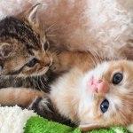 厳選!超かわいい兄弟子猫ちゃんの画像20選