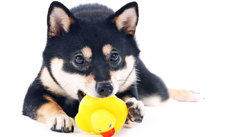 アヒルとかわいい子犬