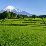 外国人観光客にオススメの静岡県の穴場観光スポット10選