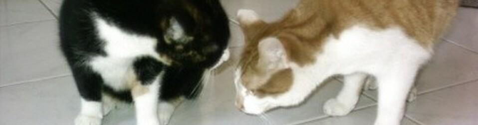 Wurmkur Für Katzen Die Richtige Entwurmung Ihrer Katze