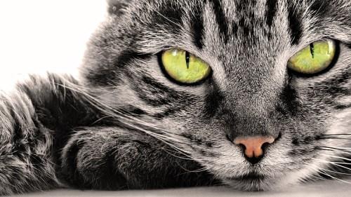 Обои на рабочий стол - коты, кошки, котята