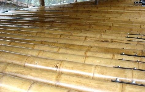 Bambú guadua de calidad