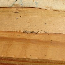 Bed Bugs and Fecal Spotting in Furniture