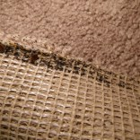 Bed Bugs beneath carpet