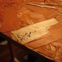 Fecal Spotting and Bed Bugs in Wood