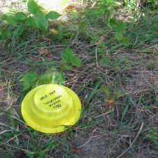 Yellow pan traps are labeled with our name & phone number.