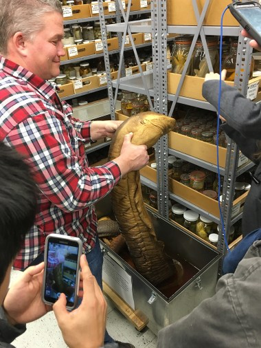 Marc Kibbey shows large specimen of electric eel