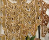 Moths in the Triplehorn collection