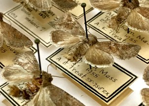 Treat moth vouchers with proper label data, including number of mites found