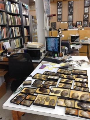 Caitlin's work desk with mollusc shells
